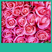 Pink Roses Live Wallpapers icon