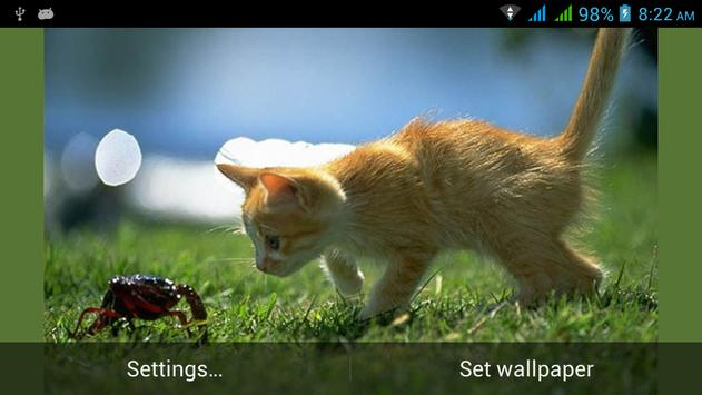 Funny Cats Live Wallpapers poster