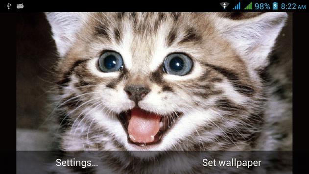 Funny Cats Live Wallpapers apk screenshot