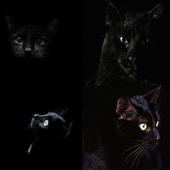Black Сat icon
