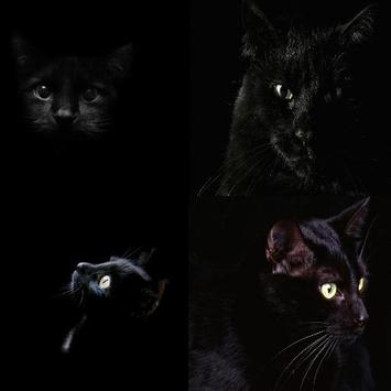 Black Сat poster