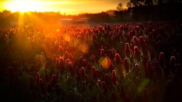 Flowers part 1 apk screenshot
