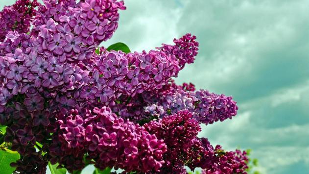 Flowers part 2 apk screenshot