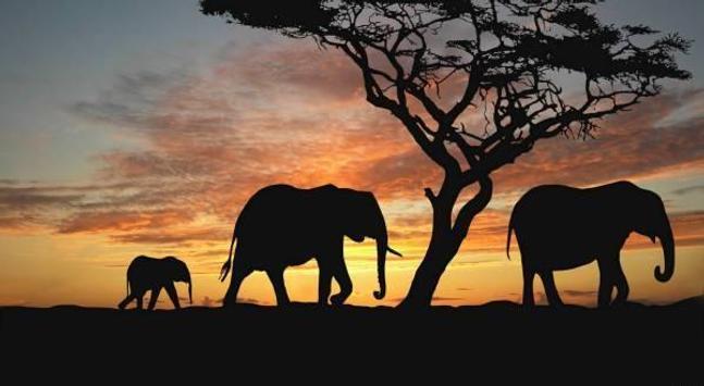 Animals part 1 apk screenshot