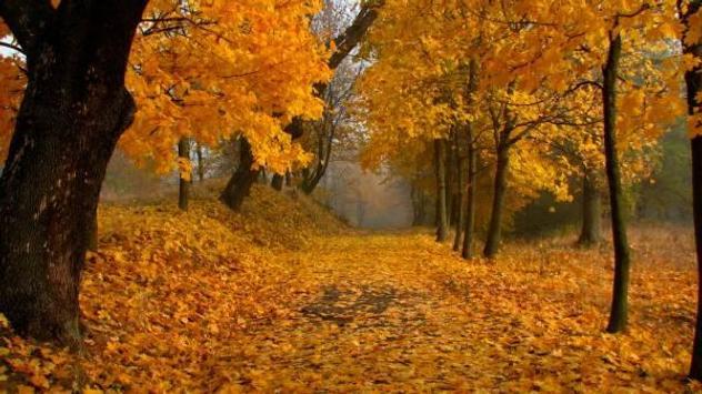 Autumn screenshot 1