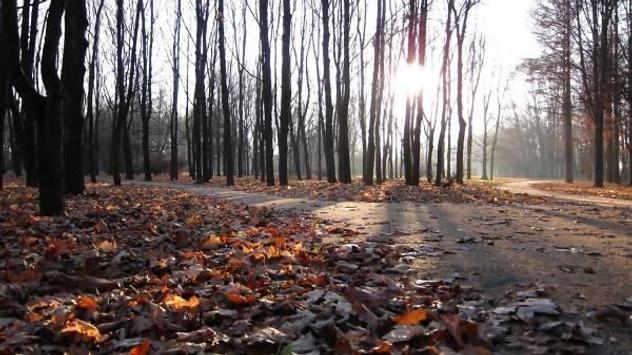 Autumn screenshot 3