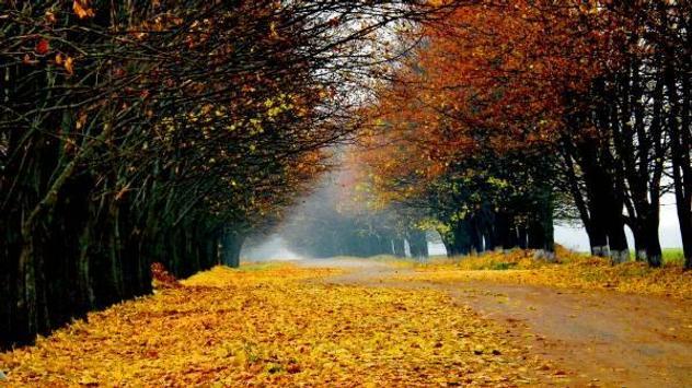 Autumn screenshot 4