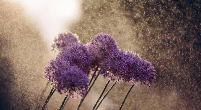 Flowers in the rain apk screenshot