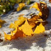 Autumn has come icon
