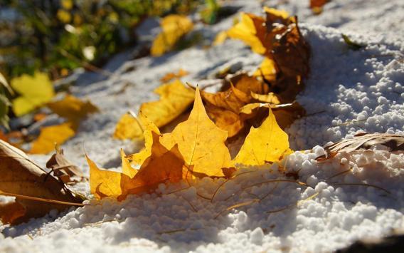 Autumn has come apk screenshot