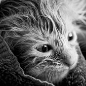 Cat in dark colours icon