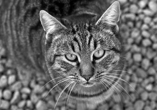 Cat in dark colours apk screenshot