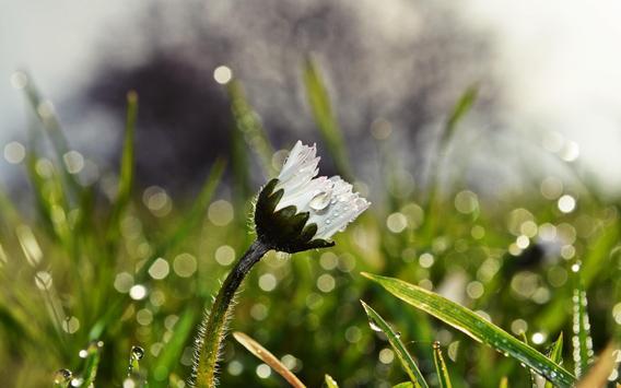 Wildflowers 1 apk screenshot