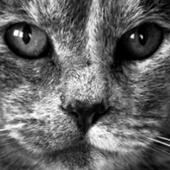 Kote icon