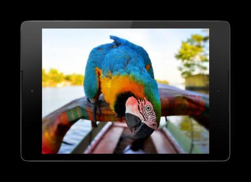 Macaw Parrot Lock Screen screenshot 12