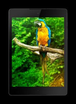 Macaw Parrot Lock Screen screenshot 13