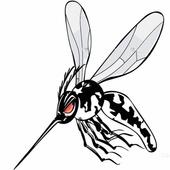 Aedes Aegypti - A Epidemia icon