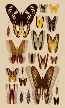 Schrödinger's Butterflies poster