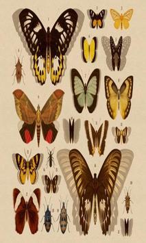 Schrödinger's Butterflies screenshot 1