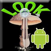 Mushrooms Look icon