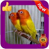 Love Bird Photo Frames icon