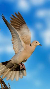 Dove Wallpapers HD screenshot 4