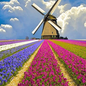 Holland Wallpapers HD icon