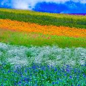 Spring Wallpapers HD icon