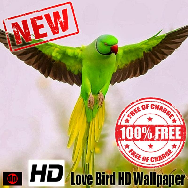 lovebird hd wallpaper for android apk download