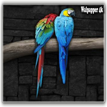 love birds hd wallpaper for Android - APK Download