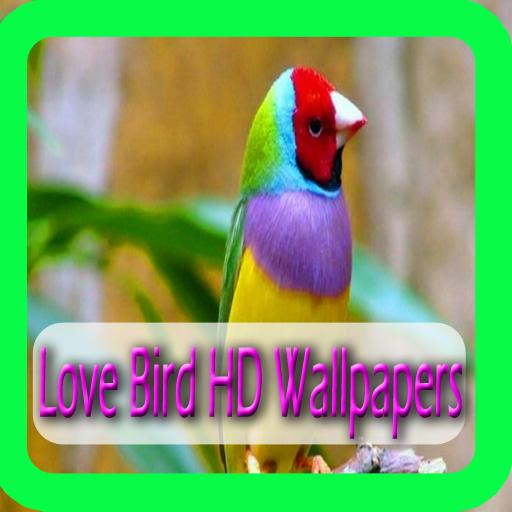 Love Birds Hd Wallpapers For Android Apk Download