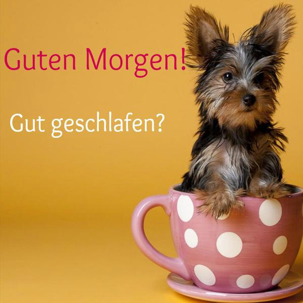 Guten Morgen Gute Nacht Gm Pics For Android Apk Download