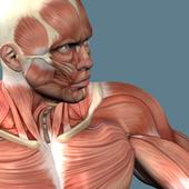 Тренировка плеч icon