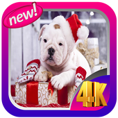 Puppy Christmas Live Wallpaper icon