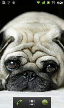 puppy pug wallpapers apk screenshot