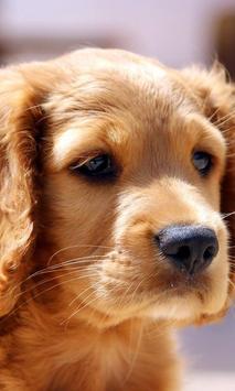 puppy pets wallpaper poster