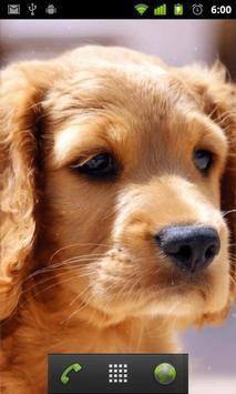 puppy pets wallpaper apk screenshot