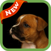 Puppy Dog Wallpaper icon