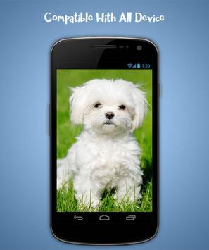 Puppy Live Wallpaper screenshot 3