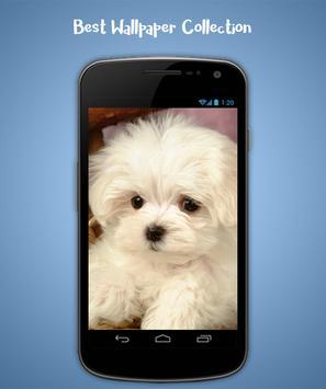 Puppy Live Wallpaper screenshot 1