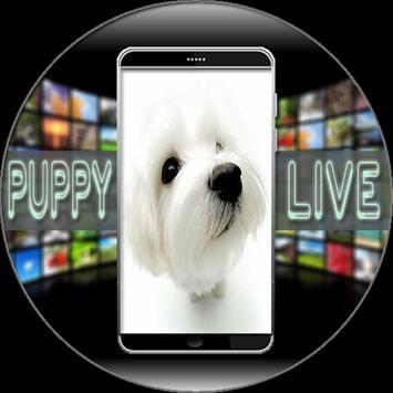Puppy Live Wallpaper apk screenshot