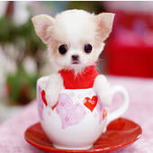 Puppies Live HD Wallpaper icon