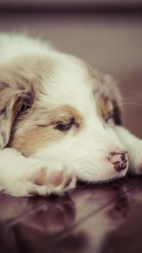 Puppies Live HD Wallpaper screenshot 14