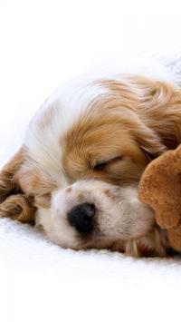 Puppies Live HD Wallpaper screenshot 2