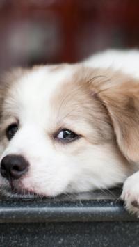 Puppies Live HD Wallpaper screenshot 5