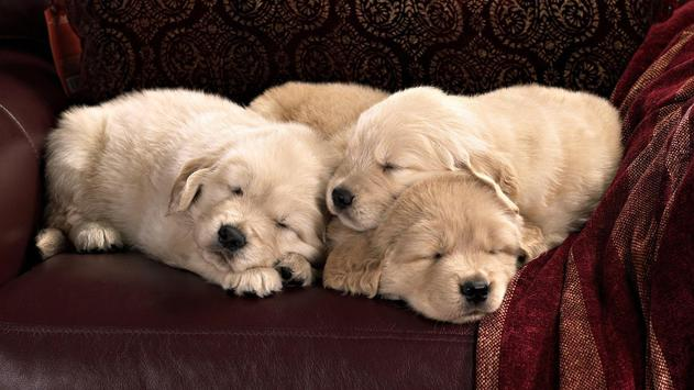 Puppies Wallpaper 2018 Pictures HD Images Free screenshot 4