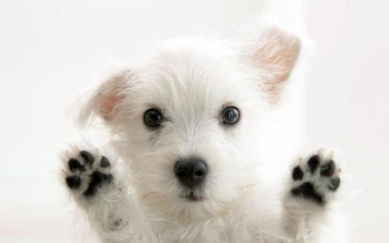 Puppies Wallpaper 2018 Pictures HD Images Free screenshot 6