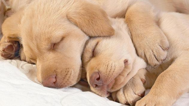 Puppies Wallpaper 2018 Pictures HD Images Free poster