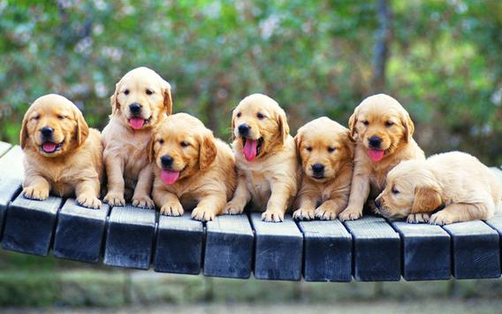 Puppies Wallpaper 2018 Pictures HD Images Free screenshot 12