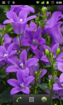 purple flower wallpapers apk screenshot